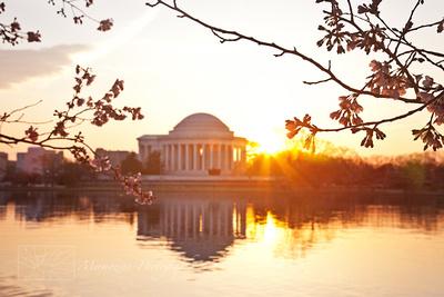 Sunrise at the Cherry Blossom Festival, Washington DC