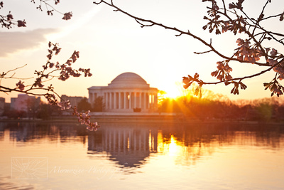 Sunrise at the Cherry Blossom Festival, Washington DC